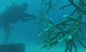 The Dominican Republic Launches Programs to Protect Coral Reefs